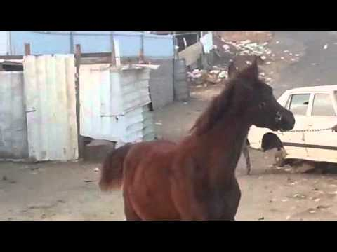 حصان مع بنت سكس