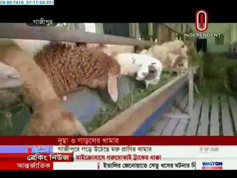 Demand rise for Camel, Dumba and 'Garol' in Qurbani Haats (20-08-2018)