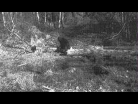 Massive Bigfoot Caught on Cam 2016