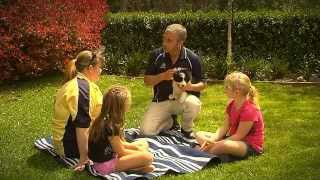 ADVANCE Puppy Care - Kids And Family