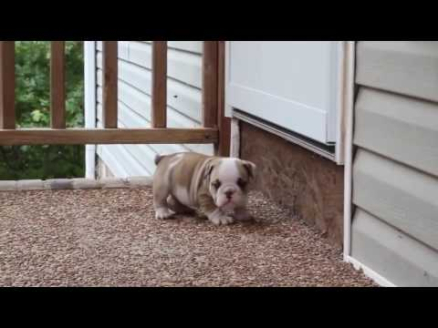 Magnum Video at 5 weeks 10-2-16