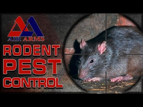 Airgun Hunting – Rodent Pest Control!