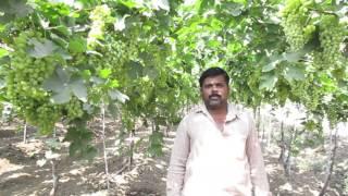 Solapur Rajaram bhosale