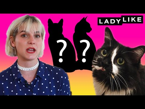 We Reunited Cat Brothers • Ladylike