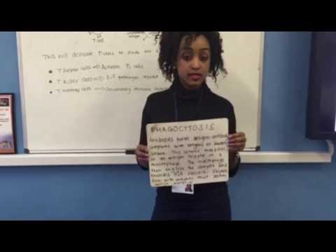 Revision material - SNAB Edexcel (A2) Topic 6 Immunity | | Jan Mukiibi ♡