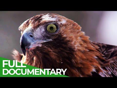 The Baltics: Untouched Animal Paradise   Free Documentary Nature