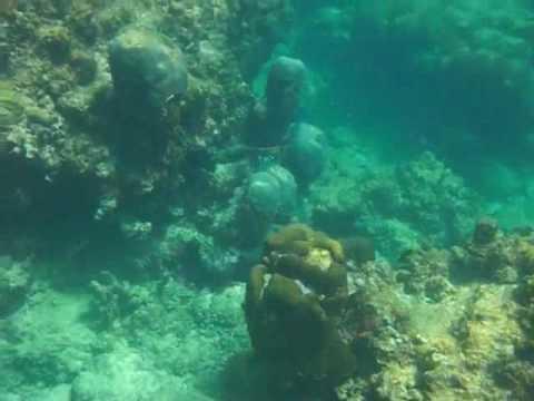 Snorkel, Barbados