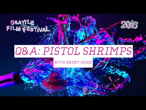 SIFF 2016 - Q&A with Brent Hodge, director of The Pistol Shrimps