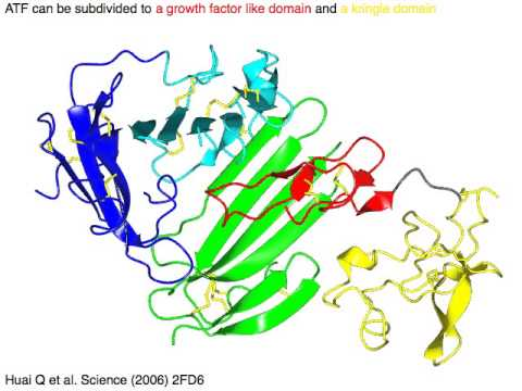 urokinase plasminogen activator and its receptor