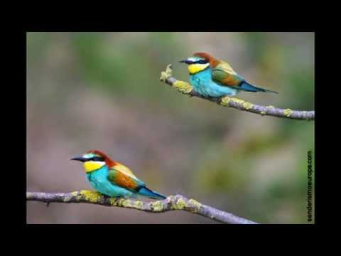 Mi mejor viaje ornitologico de Europa