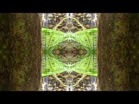 glaswald - holy mushroom mexico
