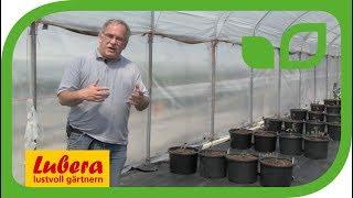 Tomaten-Züchtung bei Lubera®