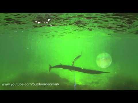 Hornfisk under overfladen