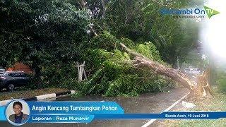 Pohon Tumbang Tutupi Badan Jalan Lintas Banda Aceh-Medan