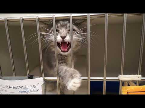 Video: WCJC Animal Shelter, June 14 - VIDEO