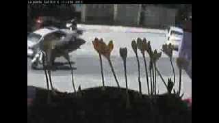 CRECIMIENTO PLANTAS ACELERADO Time-lapse