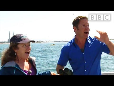 Video - Blue Whale
