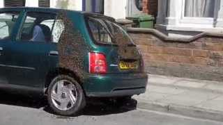 20,000 Bees Swarming A Car - You Never Seen Anything This Crazy!