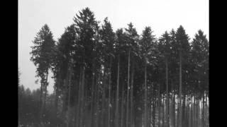 Video Misty Forest - Ozveny hôr