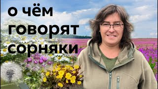 Растения пионеры и рудералы или о чём говорят сорняки