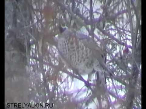 Животный мир сибири. Природа Сибири.