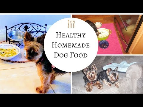 Homemade Dog Food – So Easy and So Good for your dogs