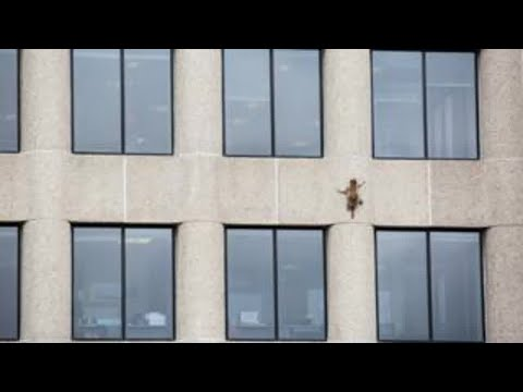 Minnesota raccoon hailed as hero after skyscraper climb