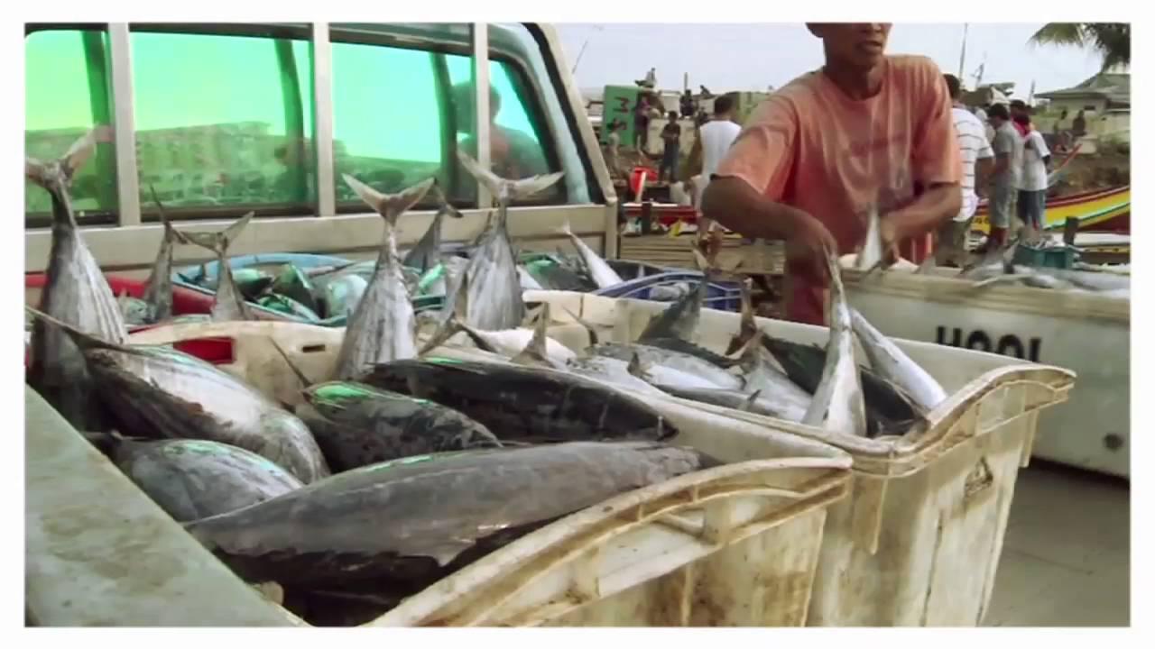 Έχεις φανταστεί πώς θα ήταν η ζωή σου χωρίς ψάρια;