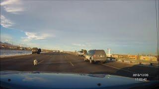 animale scapa cainele din masina