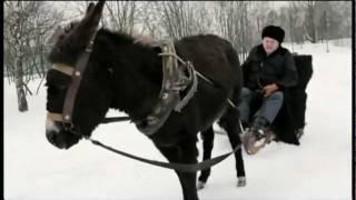 Жириновский и осел, реклама жириновского