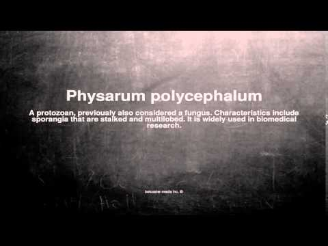 Medical vocabulary: What does Physarum polycephalum mean