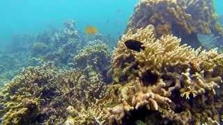 Bandar Lampung Indonesia  City pictures : Snorkeling @ Pahawang & Kelagian Island, Bandar Lampung - Indonesia