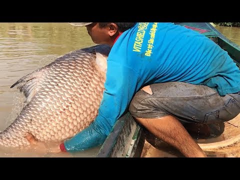 Hurjia kaloja heittoverkolla – Top 4 Cast Net Fishing