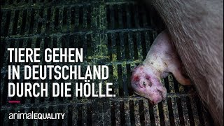 Wir wollen das ändern – und mit deiner Hilfe werden wir das! Du kannst Tieren jetzt gleich doppelt helfen:...