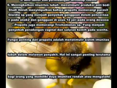 Video Tentang Manfaat Propolis Pro Smart