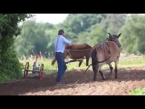 Démonstration par Claude et Vincent d'outils en maraîchage avec un âne et un petit mulet