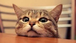 Videos Graciosos 2014 - Videos De Risa De Gatos Curiosos Y Chistosos