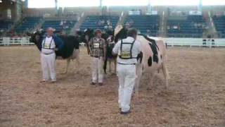 Myerstown (PA) United States  city photos : Aged Cows - All-American Holstein Show