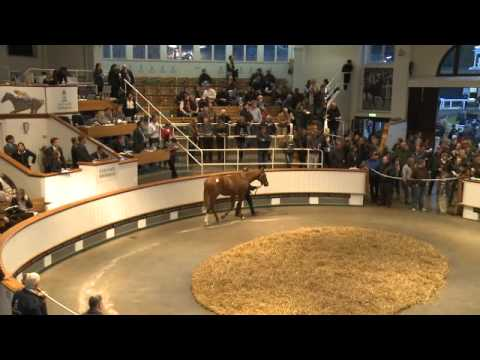 Tattersalls October Yearling Sale Book 1 Day One 2012