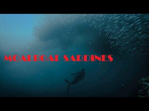FREEDIVING MOALBOAL CEBU (sardines and turtles)