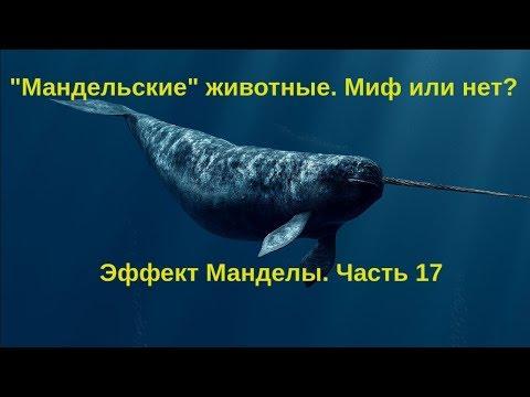 Новые Эффекты Манделы 2018  Мандельские животные - миф или нет  Часть 17 . - DomaVideo.Ru