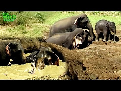An Elephant Family Saved From A Massive Farm Well.