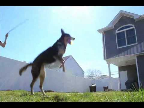 Dog jumping Double Dutch ropes