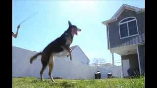 Dog Jumping Rope