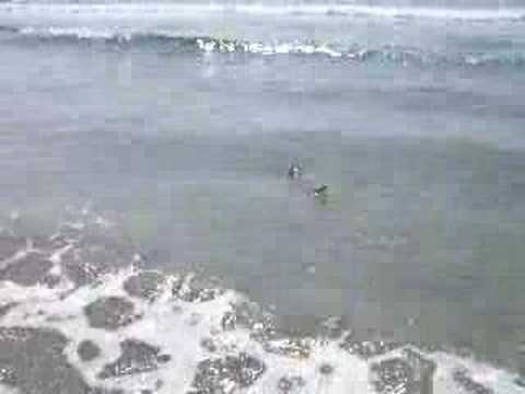 Myrtle beach shark myrtle beach videos for Myrtle beach shark fishing