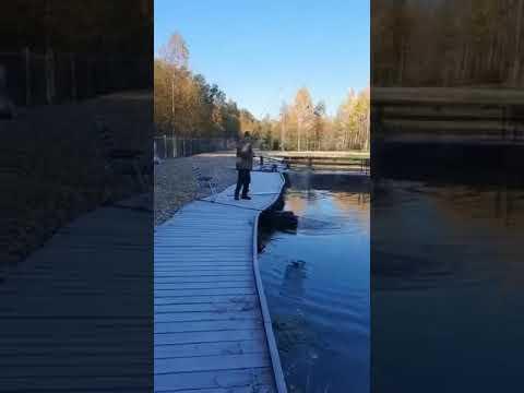 Видеоотчет о рыбалке за 7 октября 2021 г.