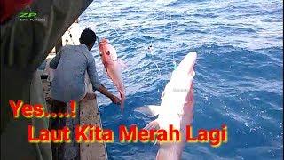 Video Alhamdulillah laut kita merah lagi || mancing ikan kakap merah MP3, 3GP, MP4, WEBM, AVI, FLV Februari 2019