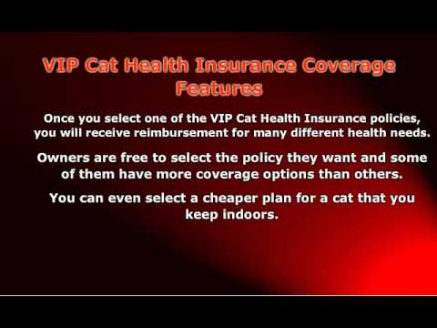Cheap VIP Cat Health Insurance For Everyone