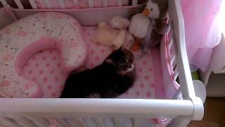 生まれ来る赤子のベッドを占拠する猫、これが本当の我が物顔に