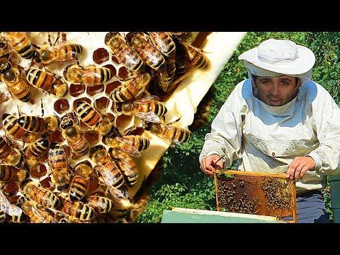 """Imagens de calor - Como é """"feito"""" o mel #Boravê"""